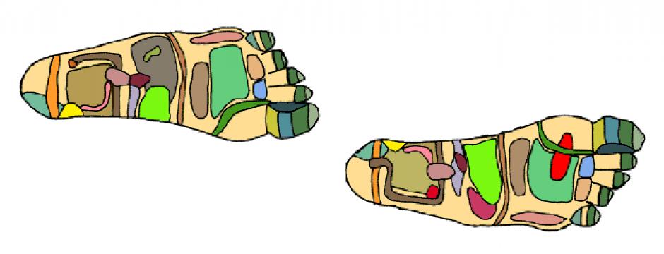 reflexologists map body organs on the feet